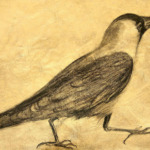 The Indian Crow-3 by Animesh Roy, Illustration Drawing, Charcoal on Paper, Beige color