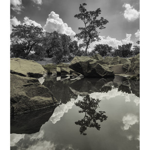 roots of Reflection by Charles Tirkey, Image Photography, Giclee Print on Hahnemuhle Paper, Gray color