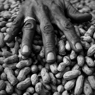 My Nuts by Dominic Lazarus, Image Photography, Digital Print on Paper, Gray color