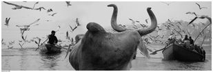 BULL by Arun K Mishra, Image Photography, Digital Print on Paper,