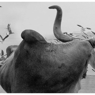 BULL by Arun K Mishra, Image Photography, Digital Print on Paper,
