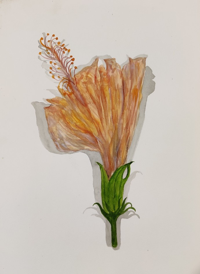 Hibiscus rosa by mahesh verma, Impressionism Painting, Watercolor on Paper, Swirl color