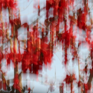 Passion by Ravi Dhingra, Image Photography, Digital Print on Canvas, Red Robin color